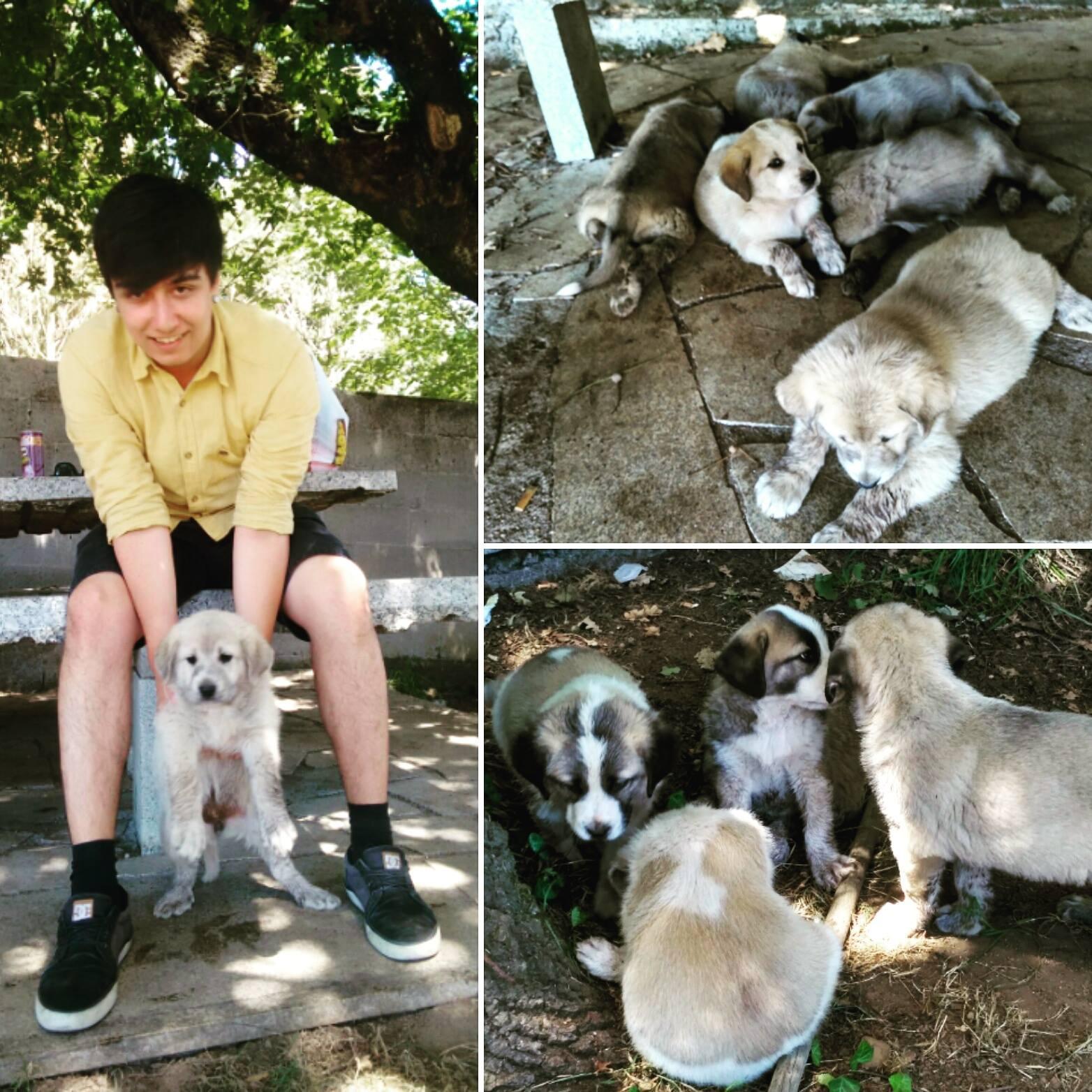 Manuel Iglesias con cachorros.